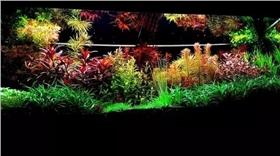 荷兰风格水草缸