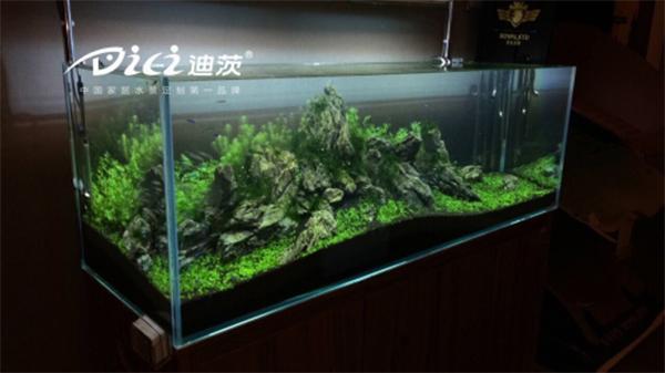 还有广州和深圳等城市的公园或动物园借水草与热带鱼的生态循环关系