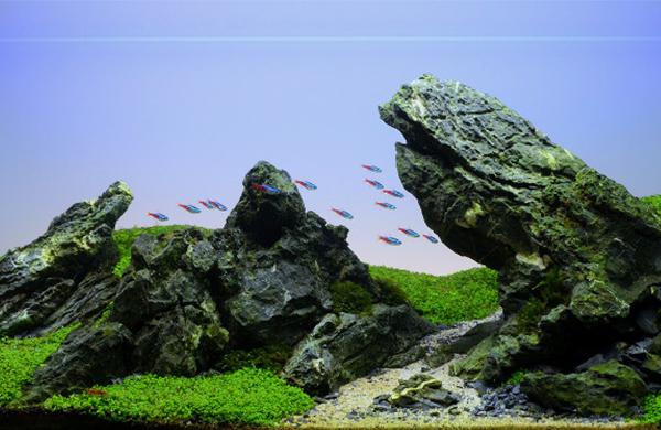 鱼缸造景所需材料有哪些?