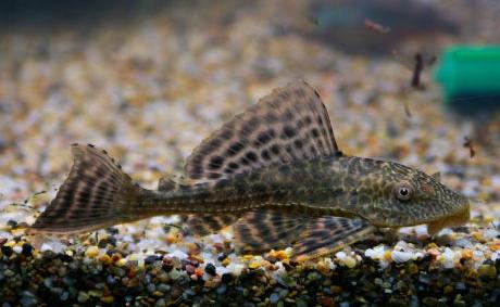 底栖动物和水中的垃圾