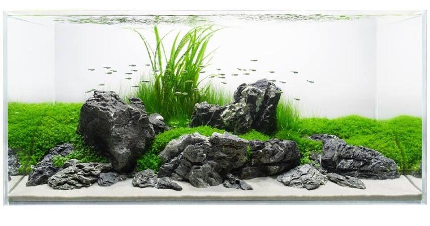 鱼缸造景是热带鱼饲养与种植水草的基础上发展起来