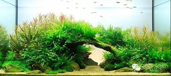 观赏鱼缸的造景也根据个人爱好,一般人用石头及砂来造景.