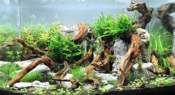 家居水景丨關于魚缸沉木造景概括