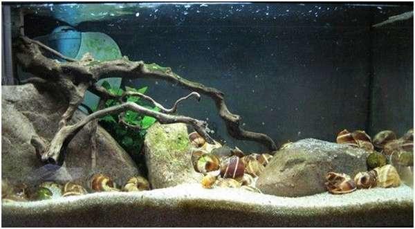 家居水景丨关于鱼缸沉木造景概括