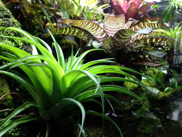 雨林缸造景丨1.5米生态雨林缸造景作品欣赏