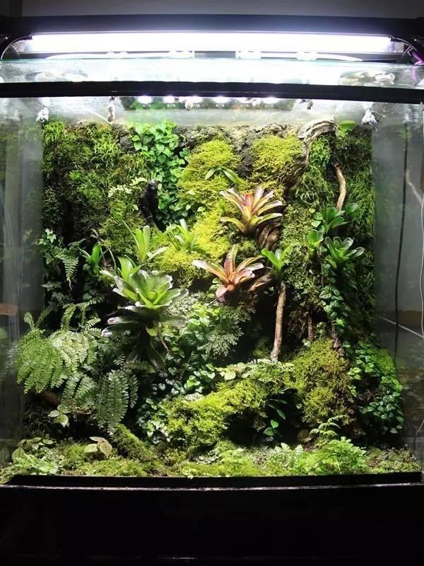 雨林缸造景丨生态雨林缸造景开缸过程赏析