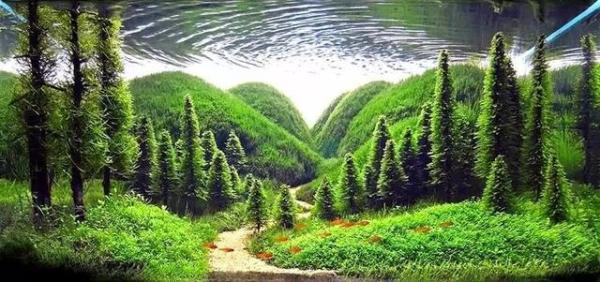 世界草缸造景大賽