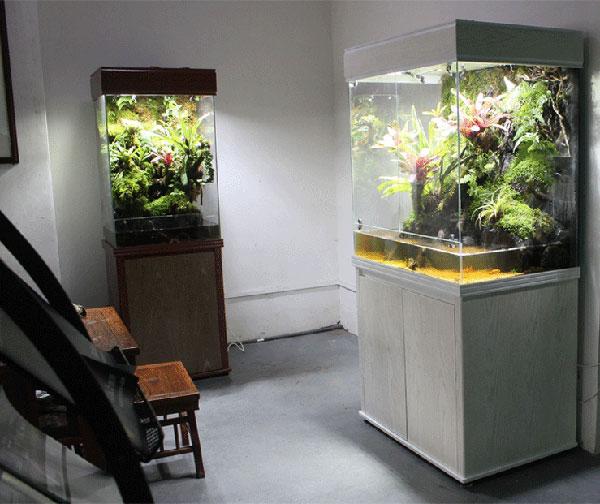 近几年,随着花卉产业逐渐转向家庭园艺市场,越来越多适合进入家庭的花卉产品不断涌现,从组合盆栽、绿墙到微景观,明星产品的声势一浪高过一浪。2013年前后,雨林缸开始在国内出现,经过几年的市场铺垫,开始进入花卉经营者及消费者视野。  迪茨美景雨林缸 雨林缸从海水缸、水草缸演变而来,拥有进入家庭的先天条件,它将水草、花卉、动物等元素综合在一起,带动了积水凤梨、空气凤梨、食虫植物、附生兰花、苔藓等一些小品种花卉的发展,丰富了盆花应用形式,受到年轻人的喜爱。由于发展时间短,宣传推广少,现在雨林缸仍处在小众市场范畴,