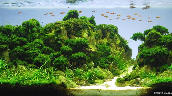 水草造景:鱼缸中的风景也很美