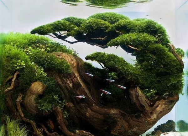 创意性的家居草缸树木景观