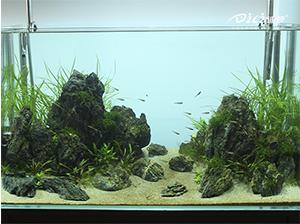 迪茨青龙石景水草缸开缸教程