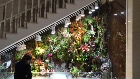 迪茨水族3.5米生态雨林缸造景教程