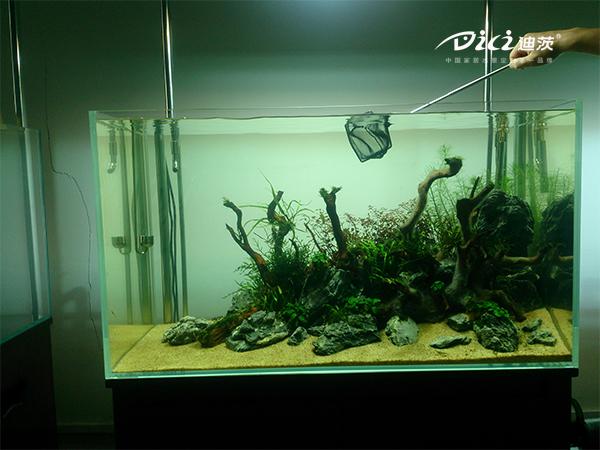 迪茨超白鱼缸90×45×50造景教程