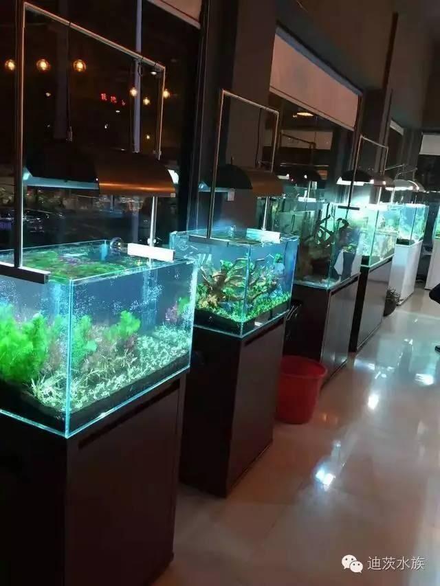 水族加盟案例:义乌迪迈水族水景店案例分享