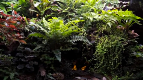 国外雨林缸开缸造景视频(一)