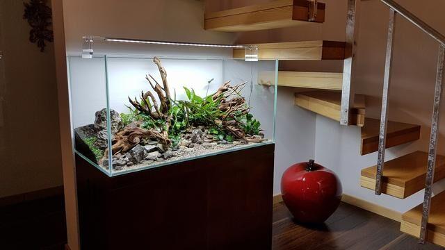 家居水景生态水草缸在跃层式楼梯下的应用案例