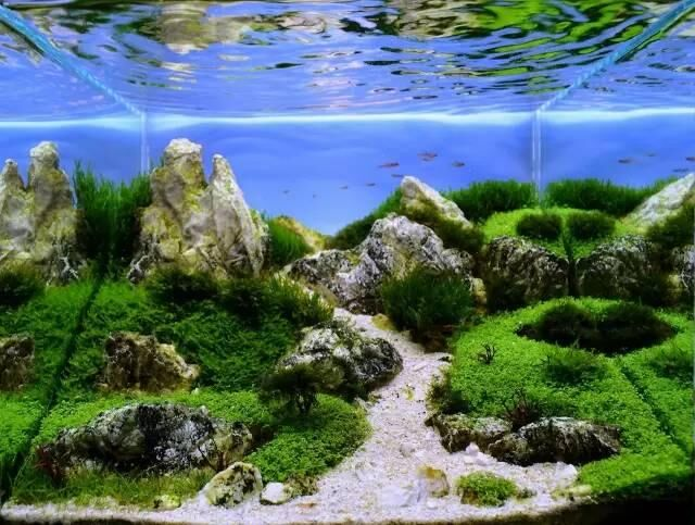 草缸造景小缸景深也能玩到极致