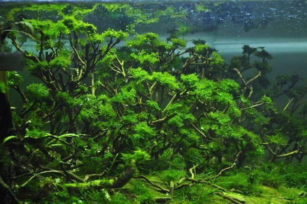 水草缸造景大缸树林景比赛作品欣赏