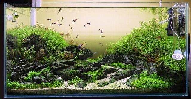 水草造景鱼缸打造唯美海底世界