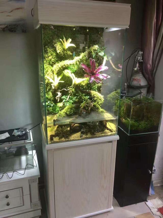 一款迪茨水族馆加盟经销商的雨林缸