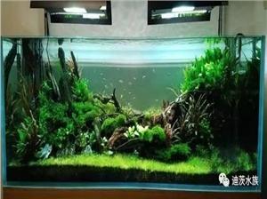 2017年迪茨水草造景比赛第九名作品欣赏