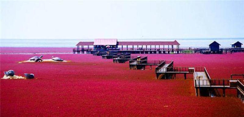 记录水草造景艺术走进红海滩湿地科学馆