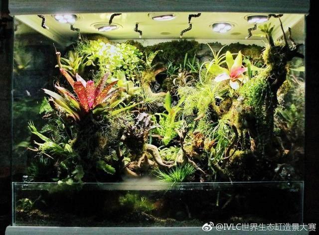 迪茨雨林缸商业景观造景案例展示