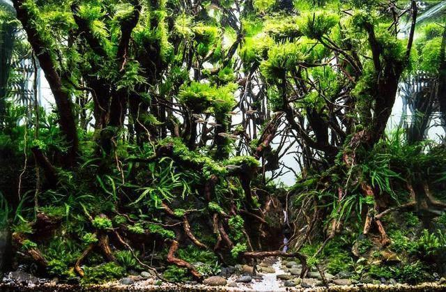 在家就能体会大自然的水草造景景观