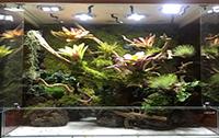 雨林缸基础知识:全面的了解雨林缸