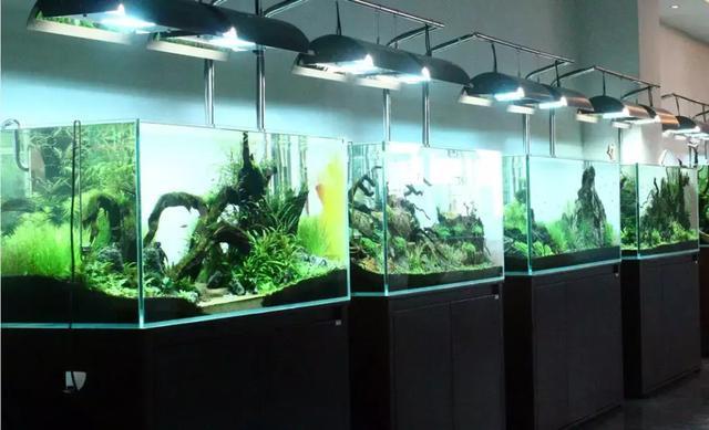 超白缸高度在水族馆加盟店销售中的影响