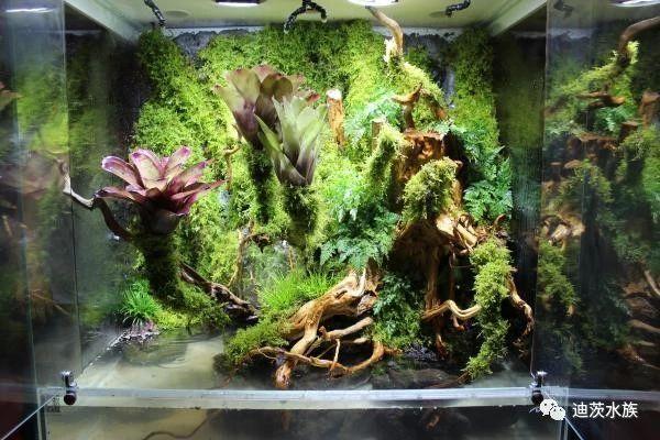 雨林缸造景:打造一份清新自然的雨林微景观