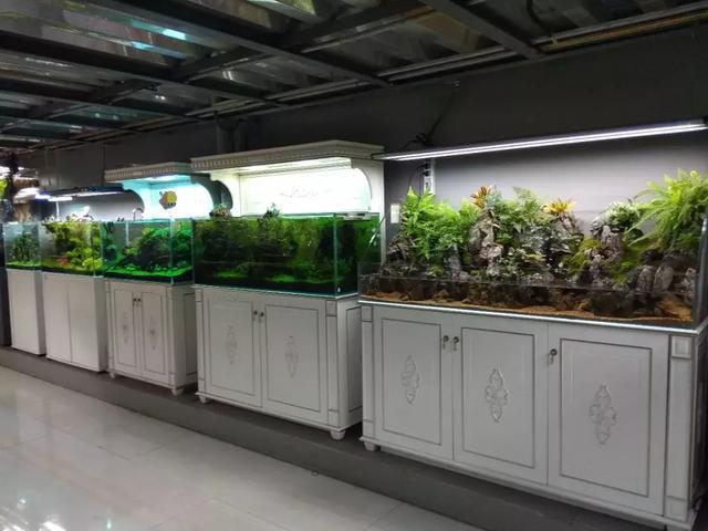 水族馆加盟:一起发展师徒培训模式,推动行业发展