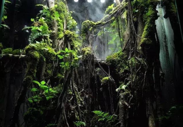 世界生态缸造景大赛十三号参赛作品展示