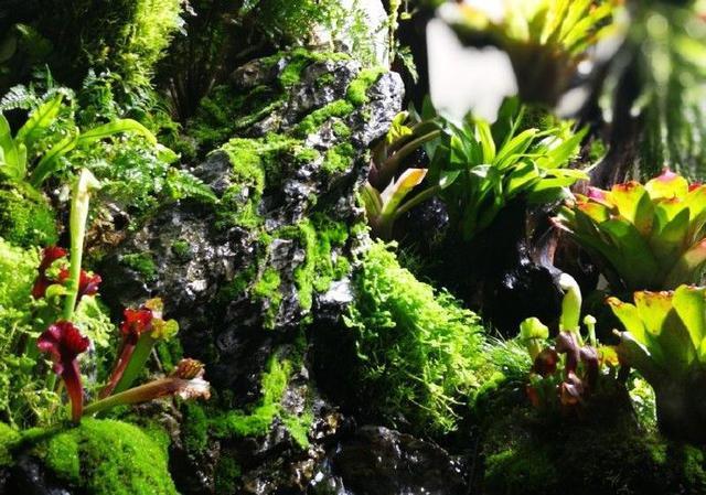 世界生态缸造景大赛蓬莱苑阁作品欣赏