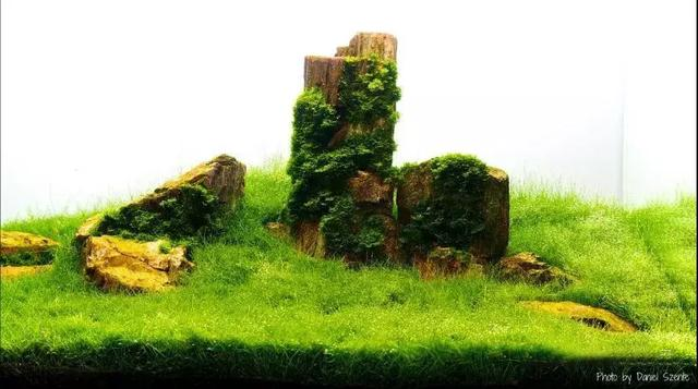 草缸造景迷你牛毛草种植成景图欣赏