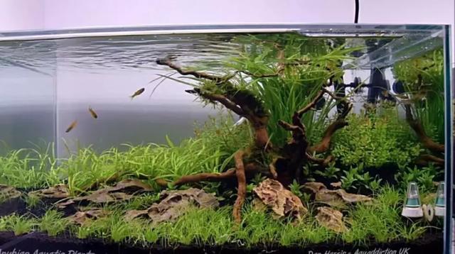 水草缸简单造景:看似简单,却不简单的水草缸