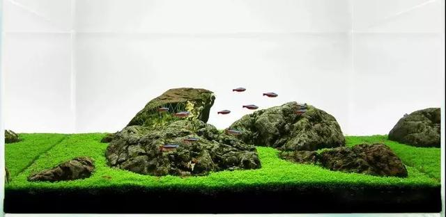 水草缸造景:成景仅靠造景石布置的水景