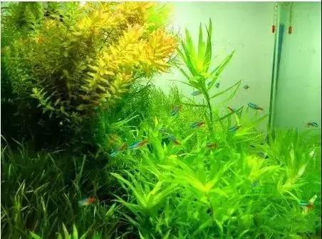 水草缸里二氧化碳浓度对生物的影响
