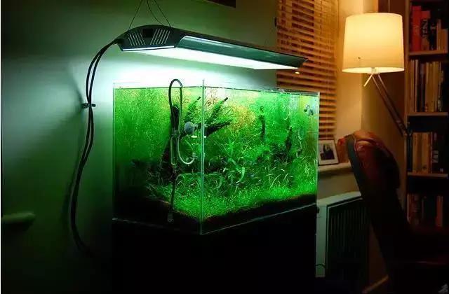 草缸水草造景教程:融入生活里的水草造景景观缸