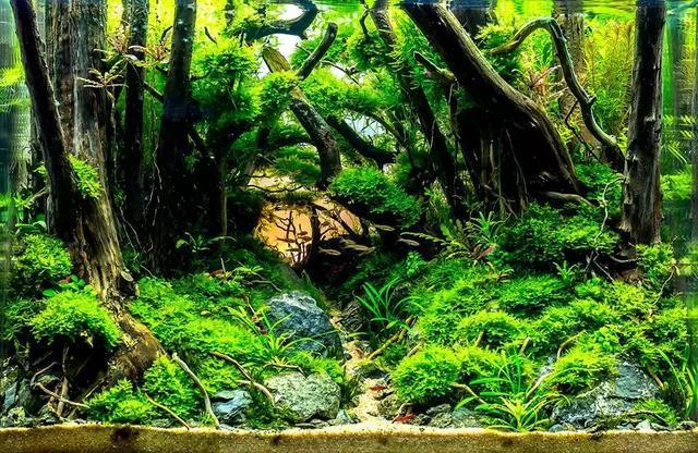 草缸造景教程:森林景骨架怎么搭?