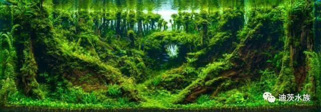 台湾水景艺术大师携手世界雨林冠军相约迪茨,传授造景技术