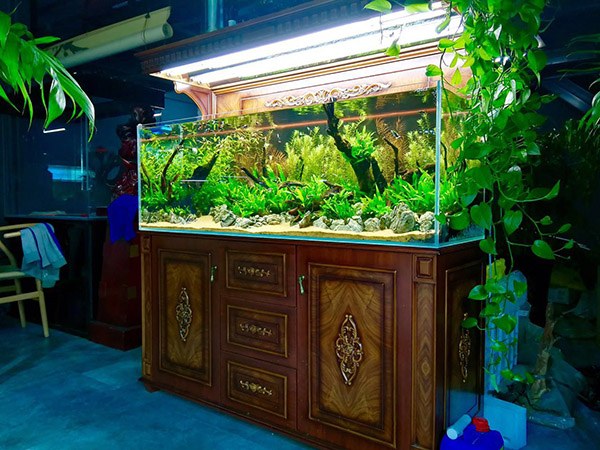 迪茨水族馆加盟费多少?水族加盟优势支持及条件流程?