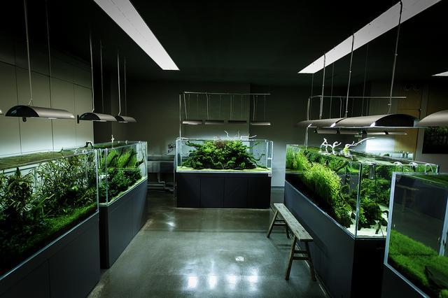 雨林缸水陆缸水草缸有什么区别,喜爱水草造景的你究竟该选哪一个?