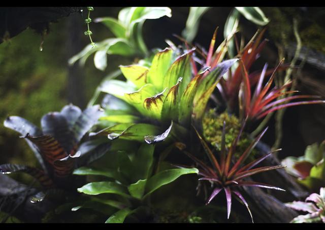 雨林缸制作方法过程,造景详细过程讲解