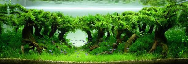 往年世界造景大赛水草缸造景优秀奖作品赏析