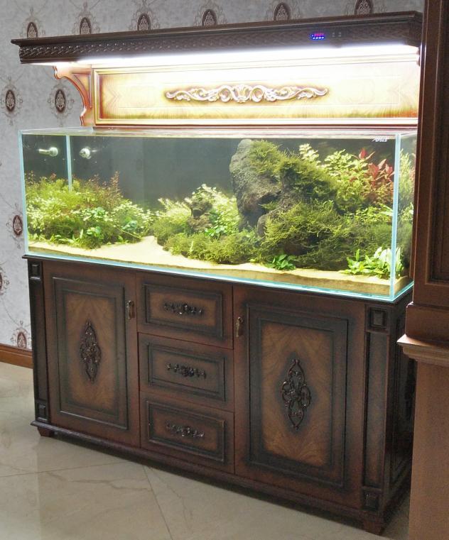 草缸造景:梦幻般的水下造景景观