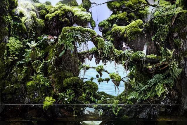 雨林缸制作过程:林泉幽谷,一个很有诗意的雨林缸造景作品