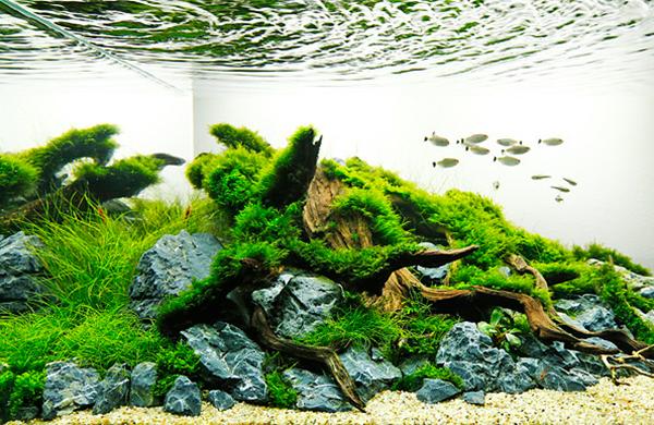 草缸造景:自然清爽色彩鲜艳的水草造景缸