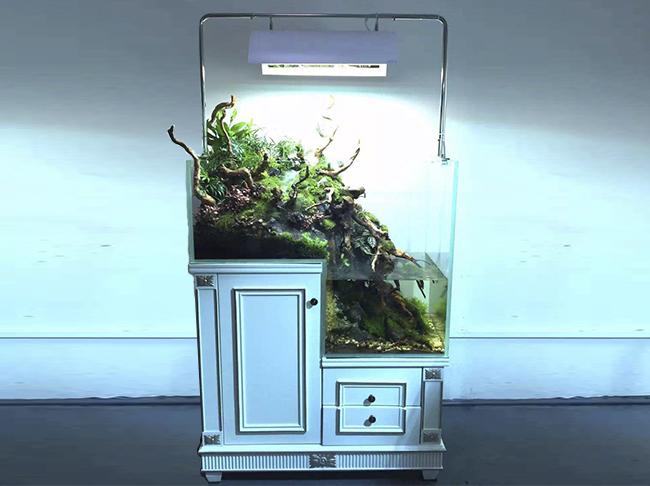 迪茨生态雨林缸(高低柜)