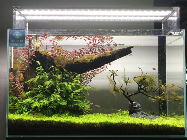 迪茨60系列超白鱼缸